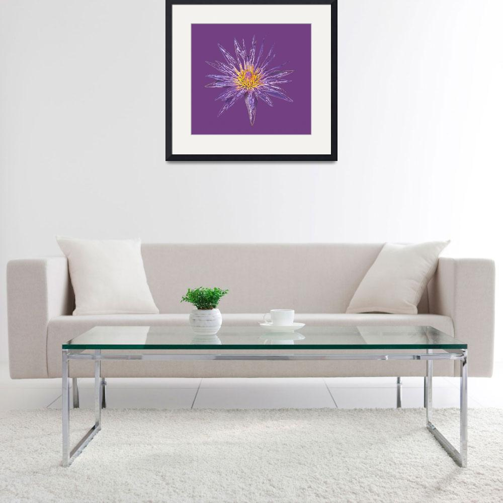 """""""Purple Water Lily Sketch&quot  (2010) by AMKPhotography"""