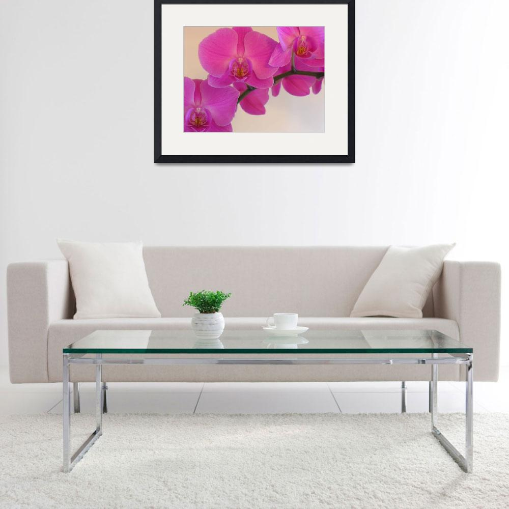 """""""Pink Orchid&quot  (2008) by SnapitNow"""