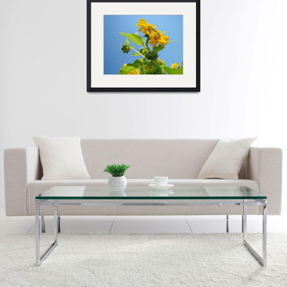 """""""SUNFLOWER Weather Forecast Sunny Baslee Troutman&quot  (2009) by BasleeTroutman"""