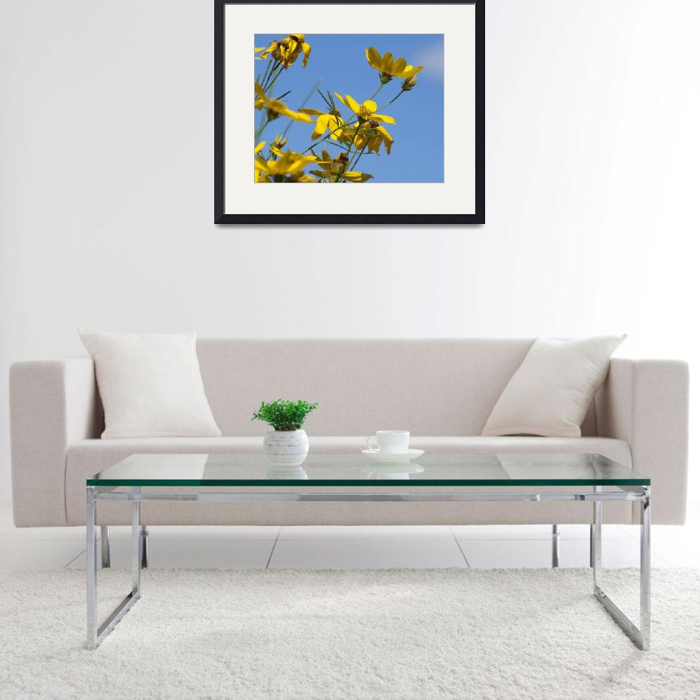 """""""Coreopsis in the Sky&quot  (2009) by amyjlbphotos"""