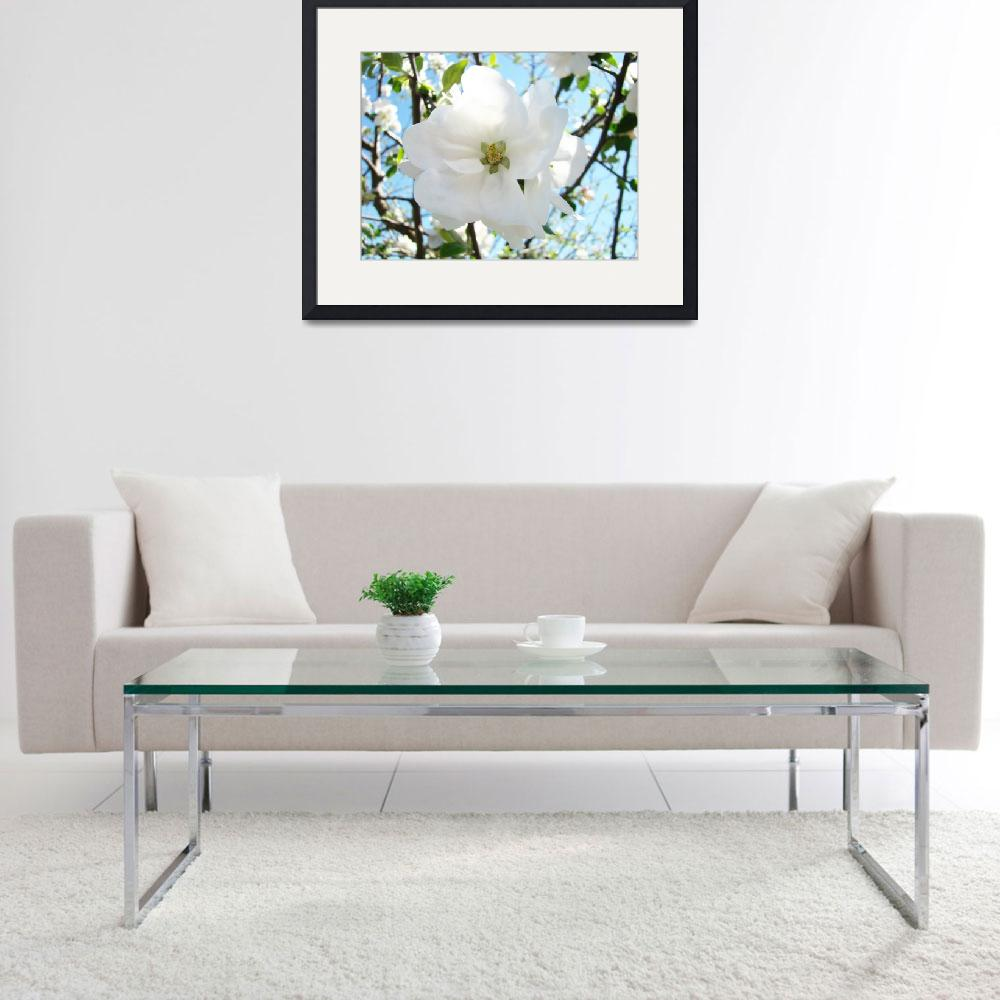 """""""Spring White Apple Tree Blossoms Spring Art Prints&quot  (2014) by BasleeTroutman"""
