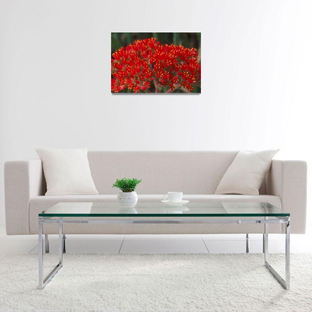 """""""Cactus Flower""""  by TerryCrain"""