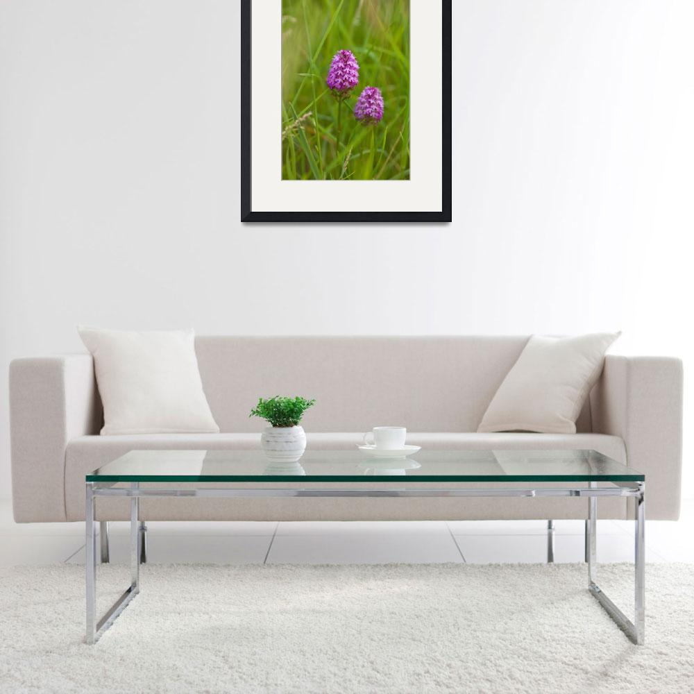 """""""Pyramidal Orchids&quot  (2009) by terrycatton"""