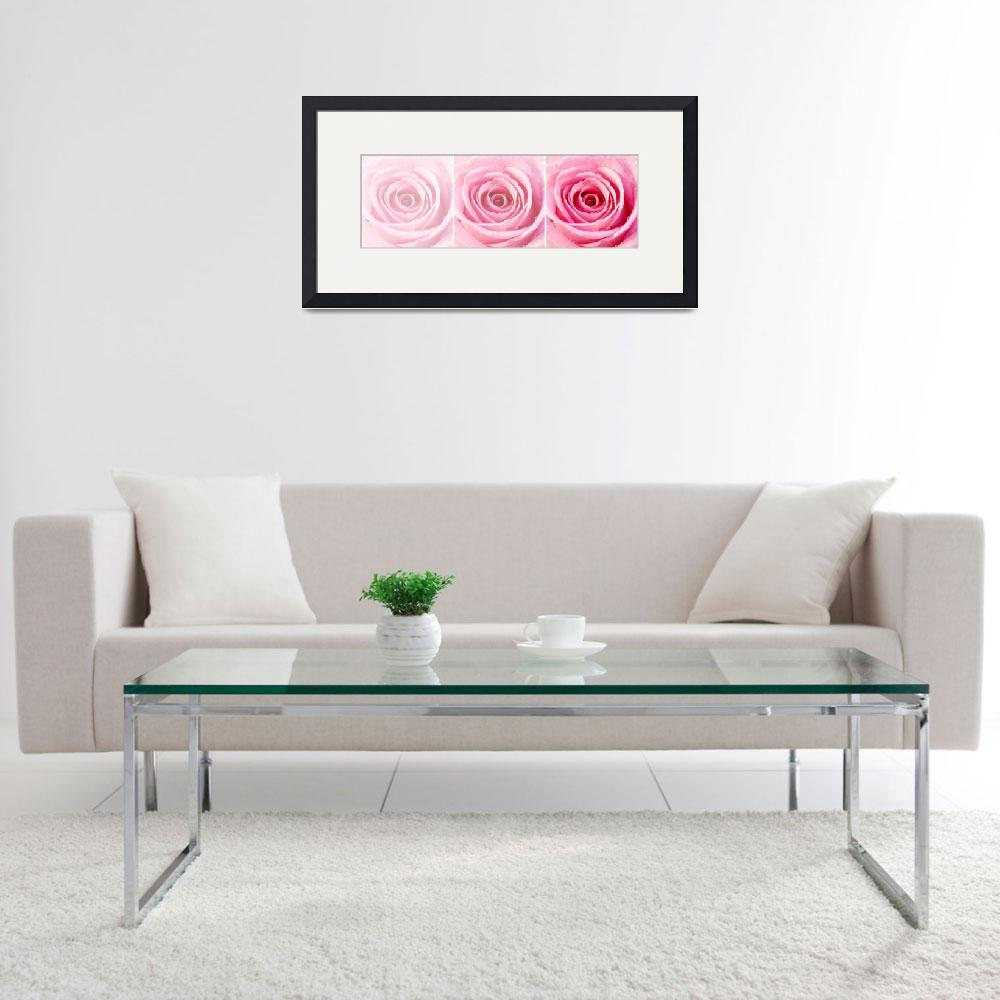 """Pink Rose with Water Droplets Triptych&quot  (2012) by NatalieKinnear"