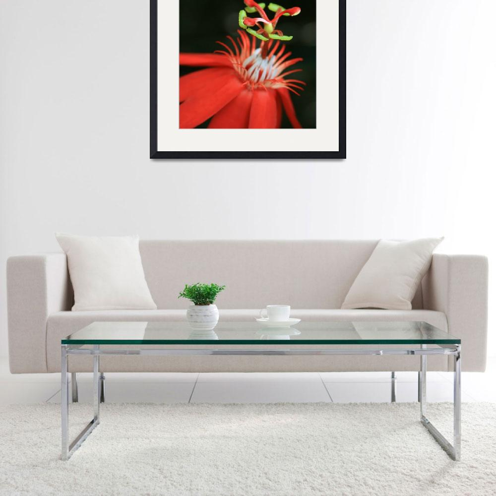 """""""Passiflora vitifolia - Scarlet Red Passion Flower&quot  (2012) by sharonmau"""