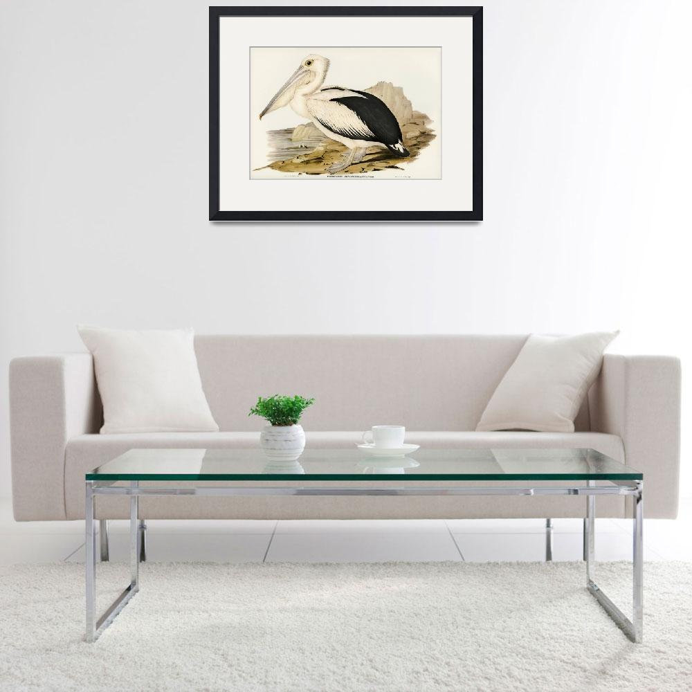 """Elizabeth Gould Bird Art Framed Print""  by buddakats1"