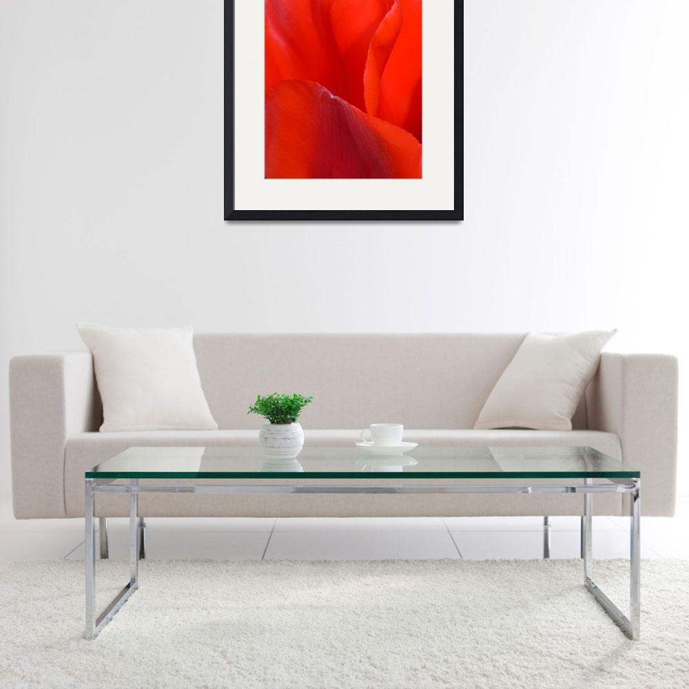 """""""""""Red Tulip 1"""" #1042315.0676&quot  (2015) by achimkrasenbrinkart"""