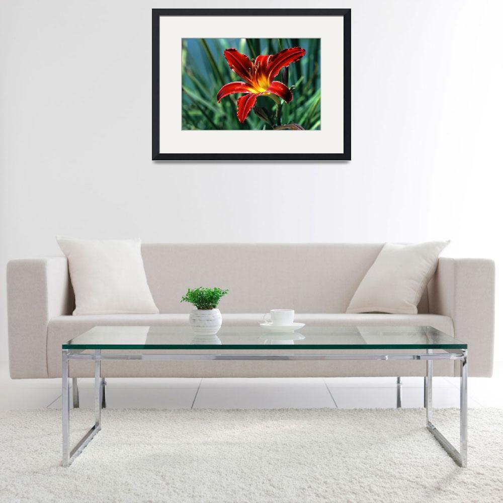 """""""Red Lily&quot  (2009) by buffaloworks"""