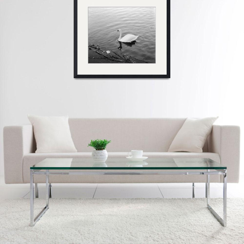 """""""White Swan in Black & White&quot  (2010) by riclip"""
