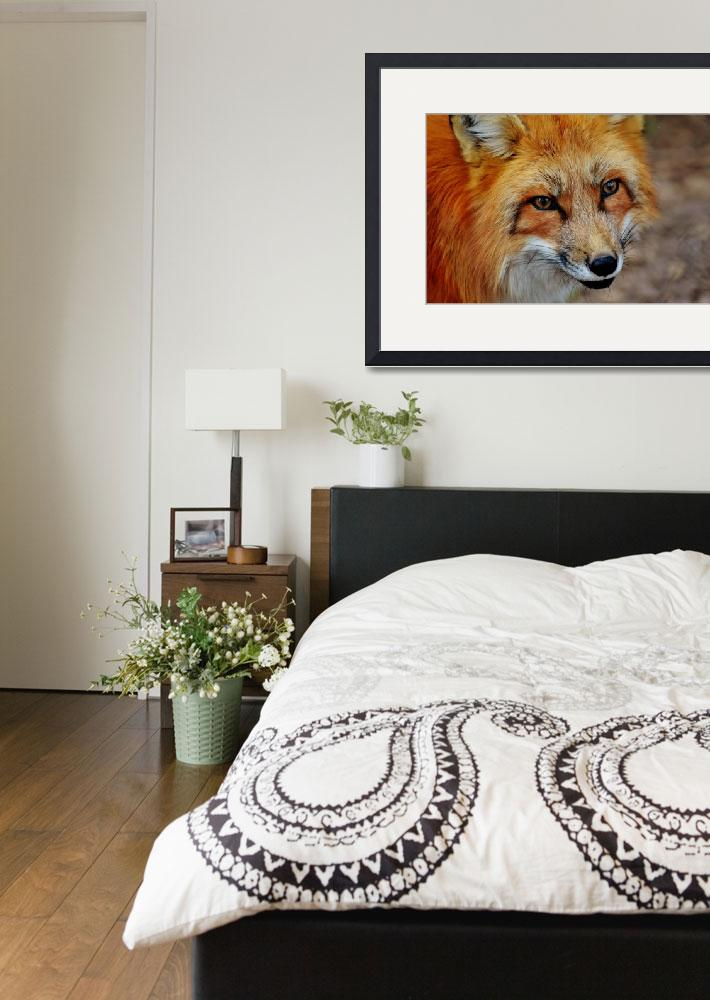 """""""Red Fox Wildlife Art Print""""  (2016) by rogueart"""