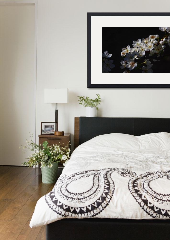 """""""White-Flowers-Floating-in-Black-2-(Descanso-March-&quot  by manusferrea"""