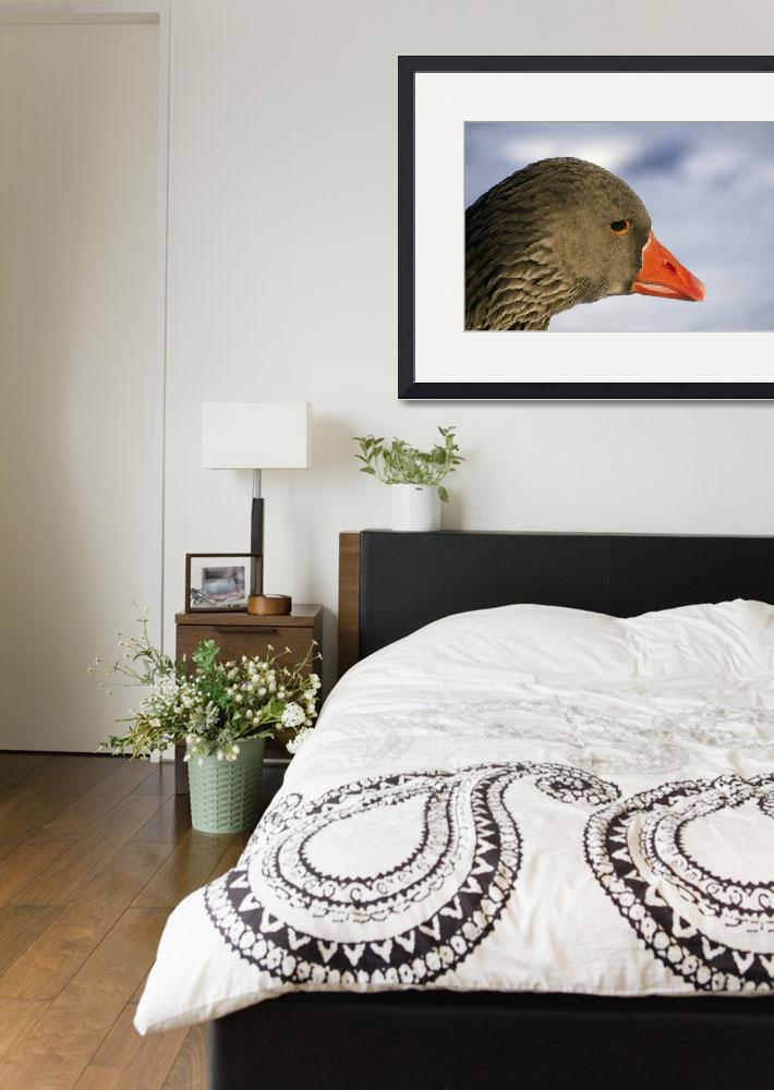 """""""Domestic duck&quot  by Panoramic_Images"""