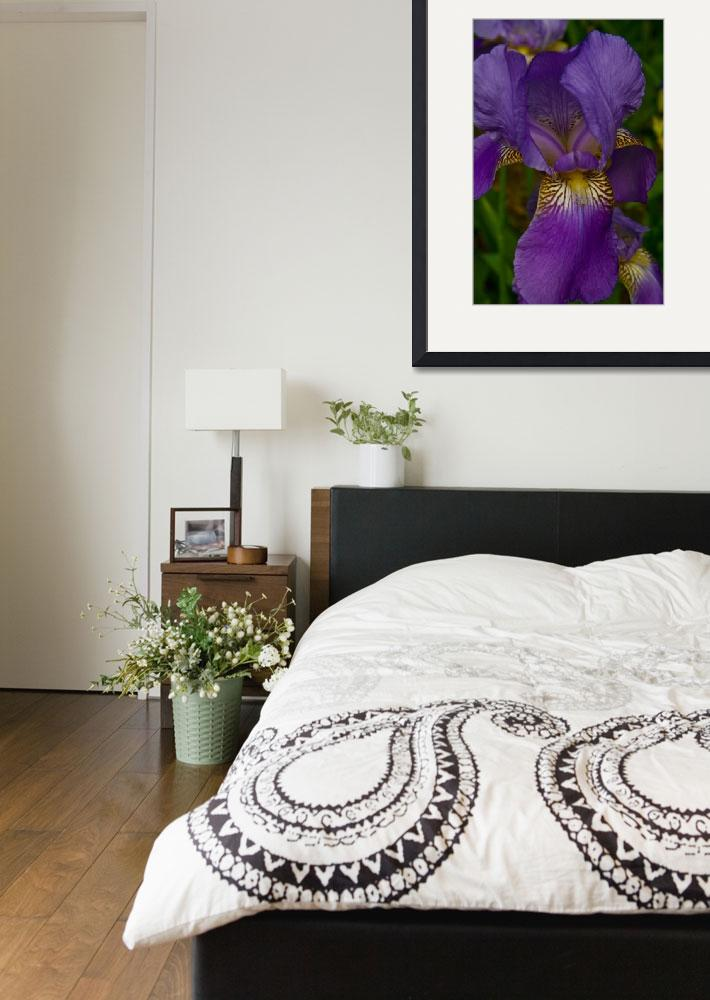 """""""Iris, the beautiful flower.&quot  (2008) by TEHuchton"""