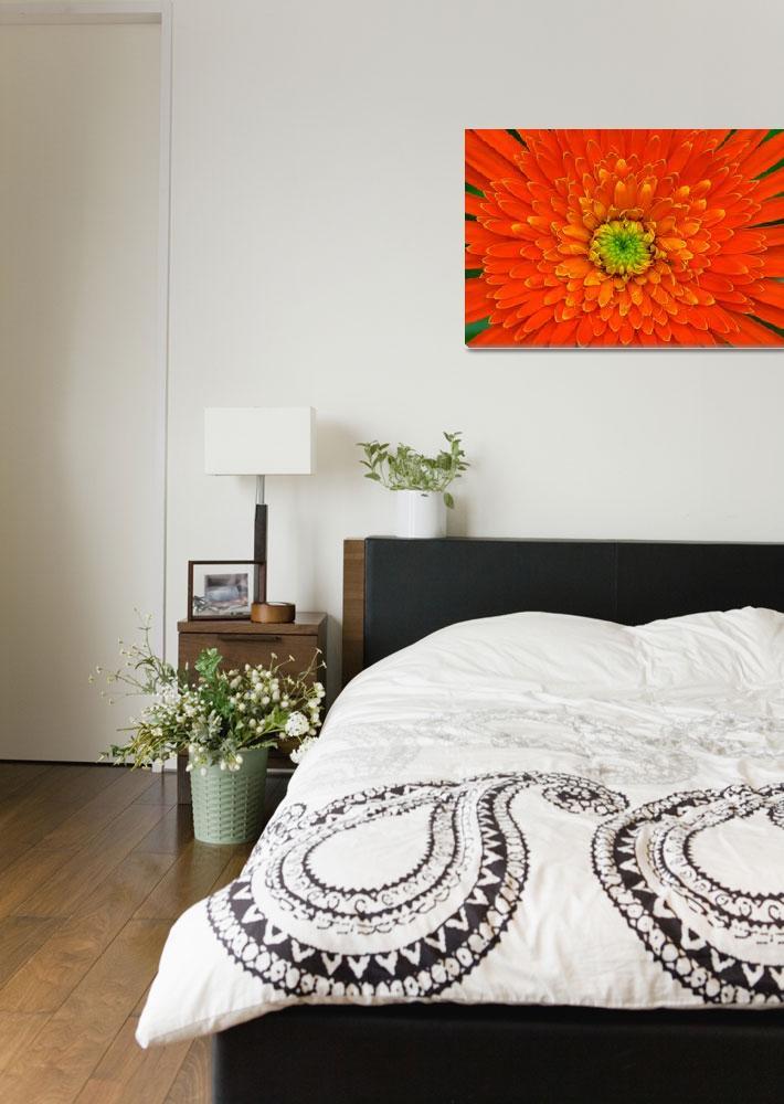 """Dahlia Flower""  (2006) by mrosley"