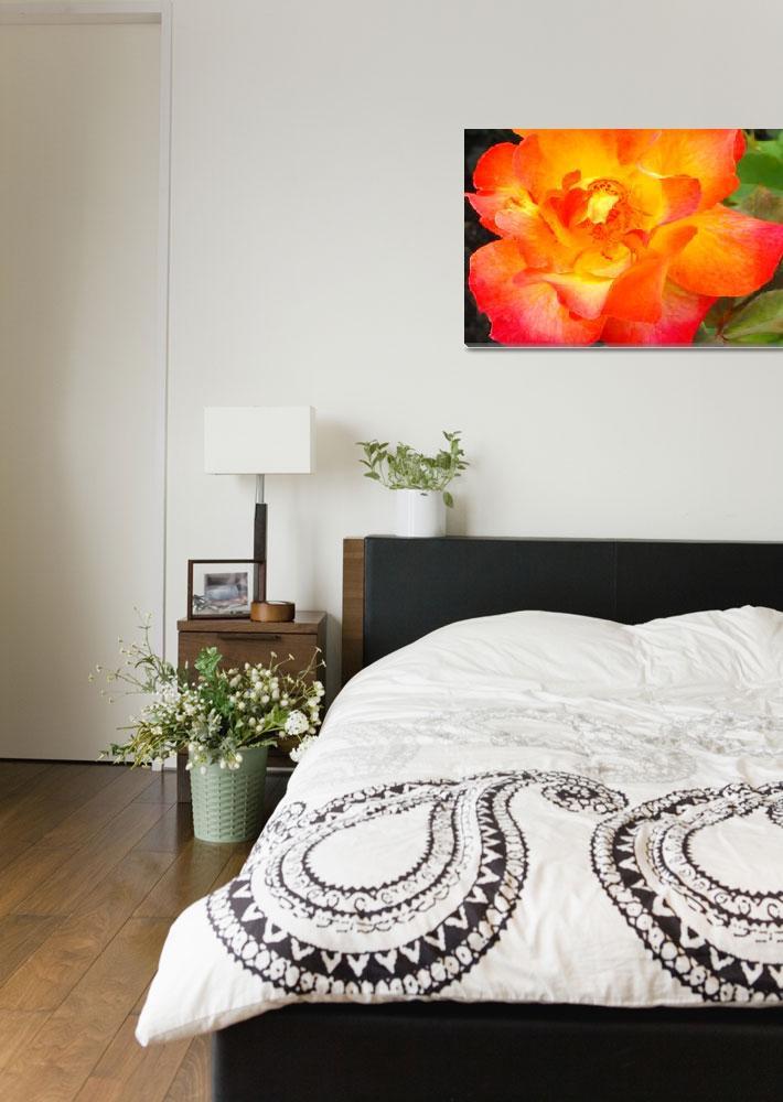 """Orange rose""  by ceebee276"
