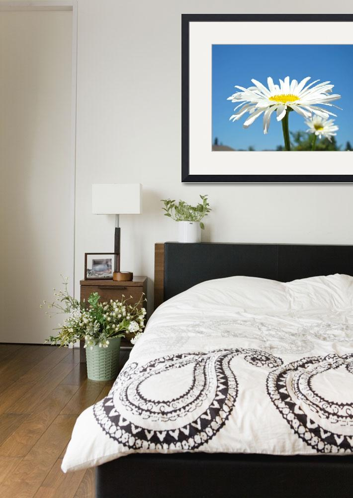 """""""White Daisy Floral art prints Summer Daisies&quot  (2010) by BasleeTroutman"""
