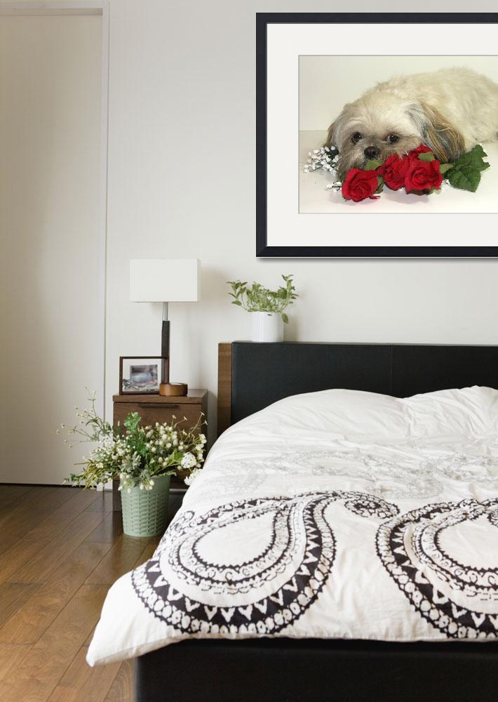 """""""Are we done yet?  Shih tzu Dog Photograph&quot  (2007) by JJamison"""