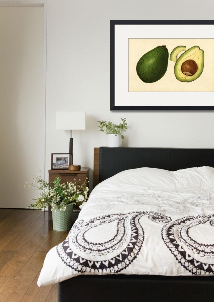 """Vintage Illustration of an Avocado 2&quot  by Alleycatshirts"
