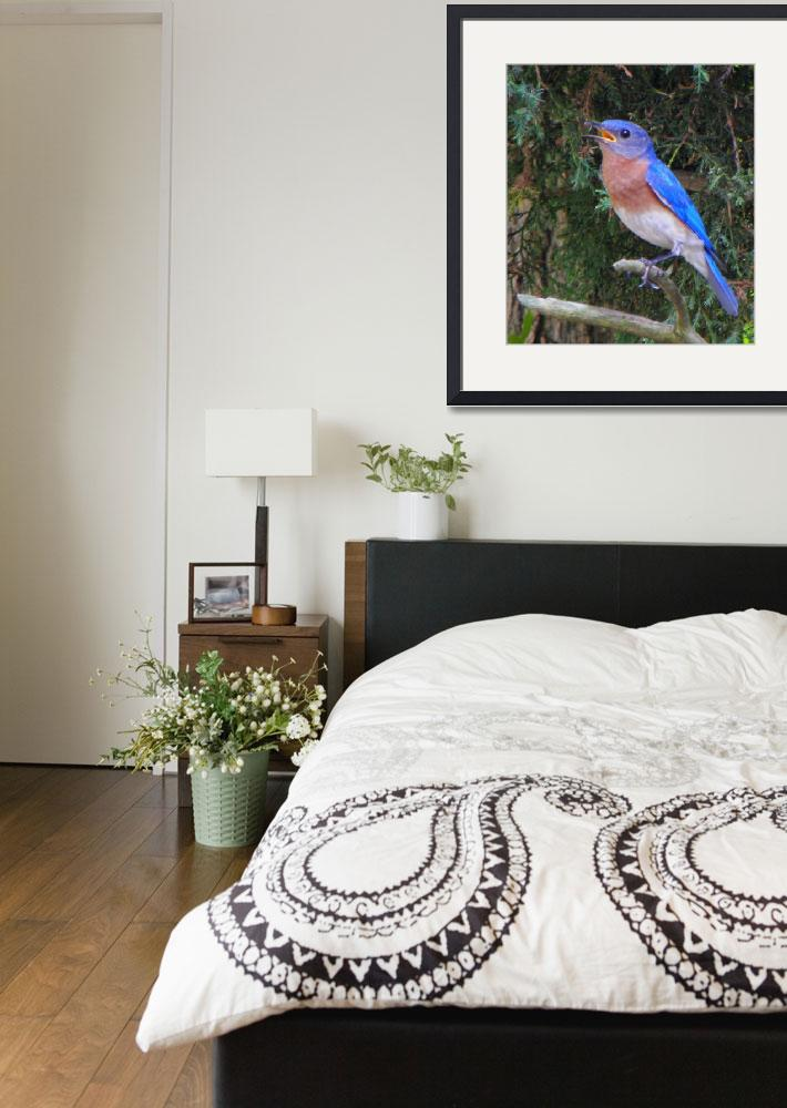 """""""Male Bluebird Watching Out Over His Domain&quot  (2010) by SandiOReilly"""