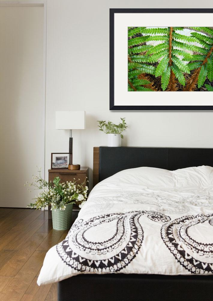 """""""Forest Ferns Branches Leaves Art Prints Fern&quot  (2014) by BasleeTroutman"""