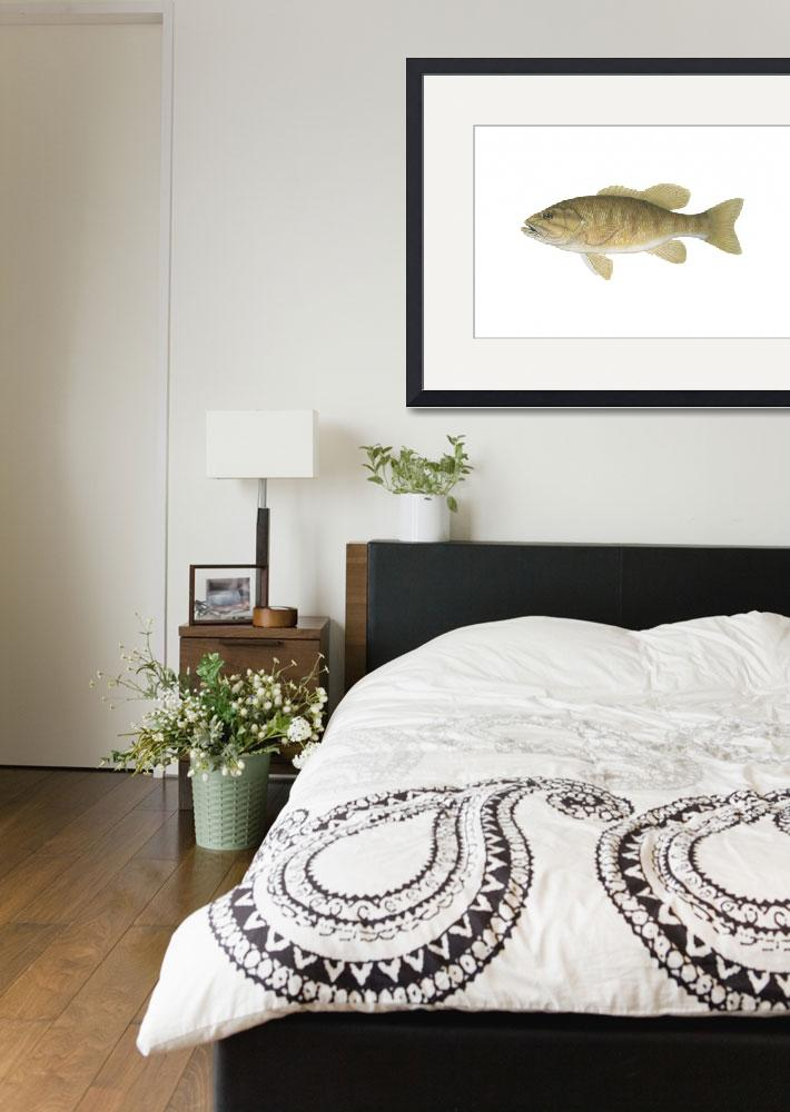 """""""Illustration of a smallmouth bass&quot  by stocktrekimages"""