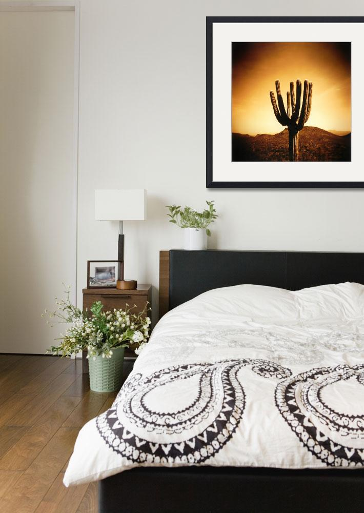 """""""Tucson Mountain Cactus&quot  by WillAustin"""