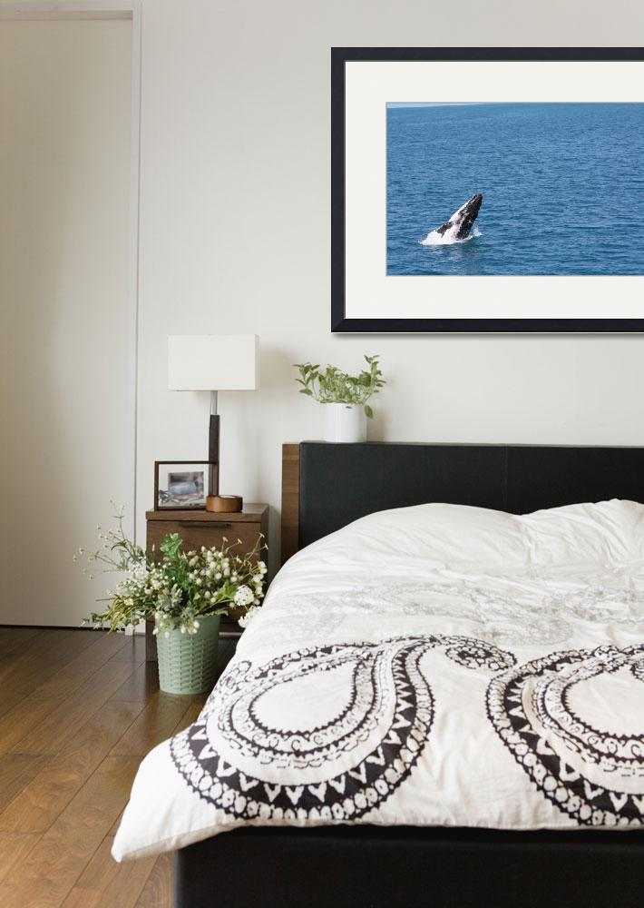 """""""NaP_ Whale Watching032""""  by nevilleprosser"""