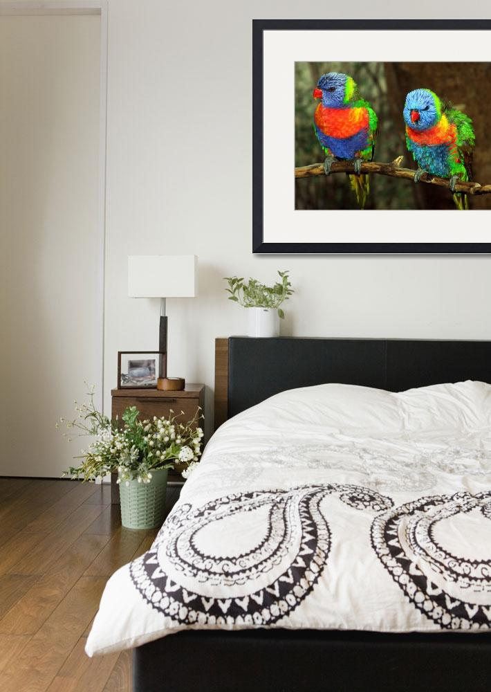 """""""Pr Lorikeets9600&quot  by keispencer"""
