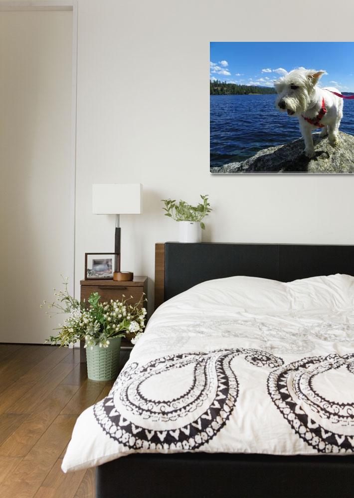 """""""Phoebe Enjoying A Beautiful View - Fun With Dogs&quot  by artsandi"""