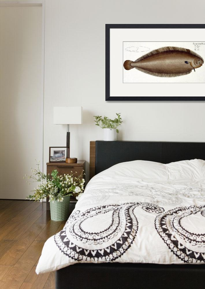 """""""Dover Sole (Solea Solaea)&quot  by fineartmasters"""