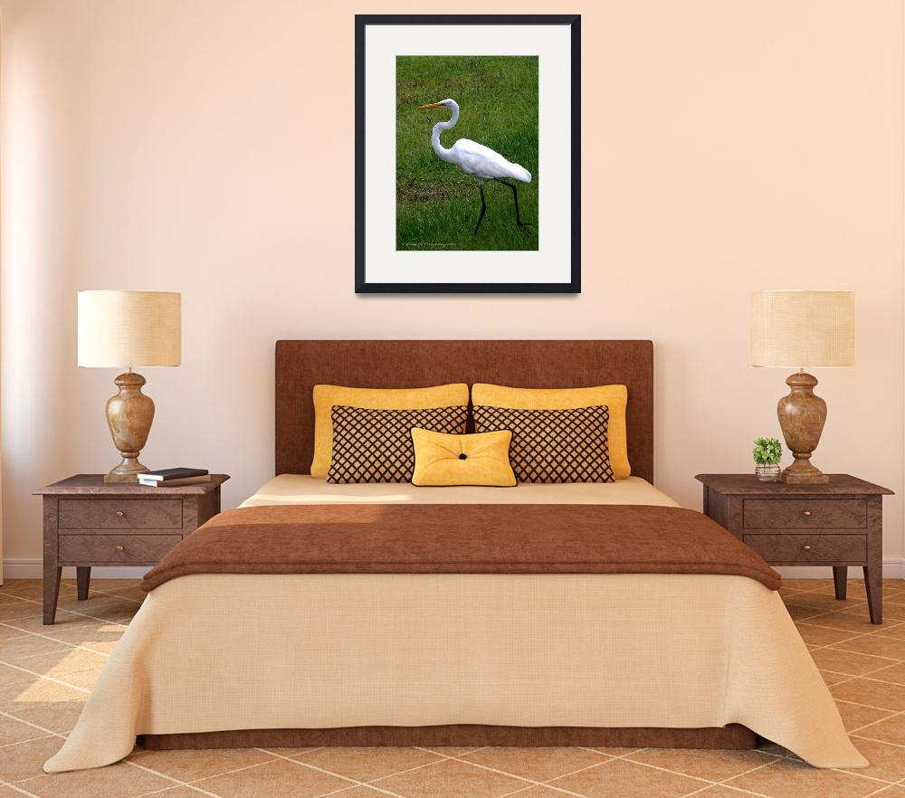 """""""""""Great Egret On the Move""""""""  (2009) by ChrisCrowley"""