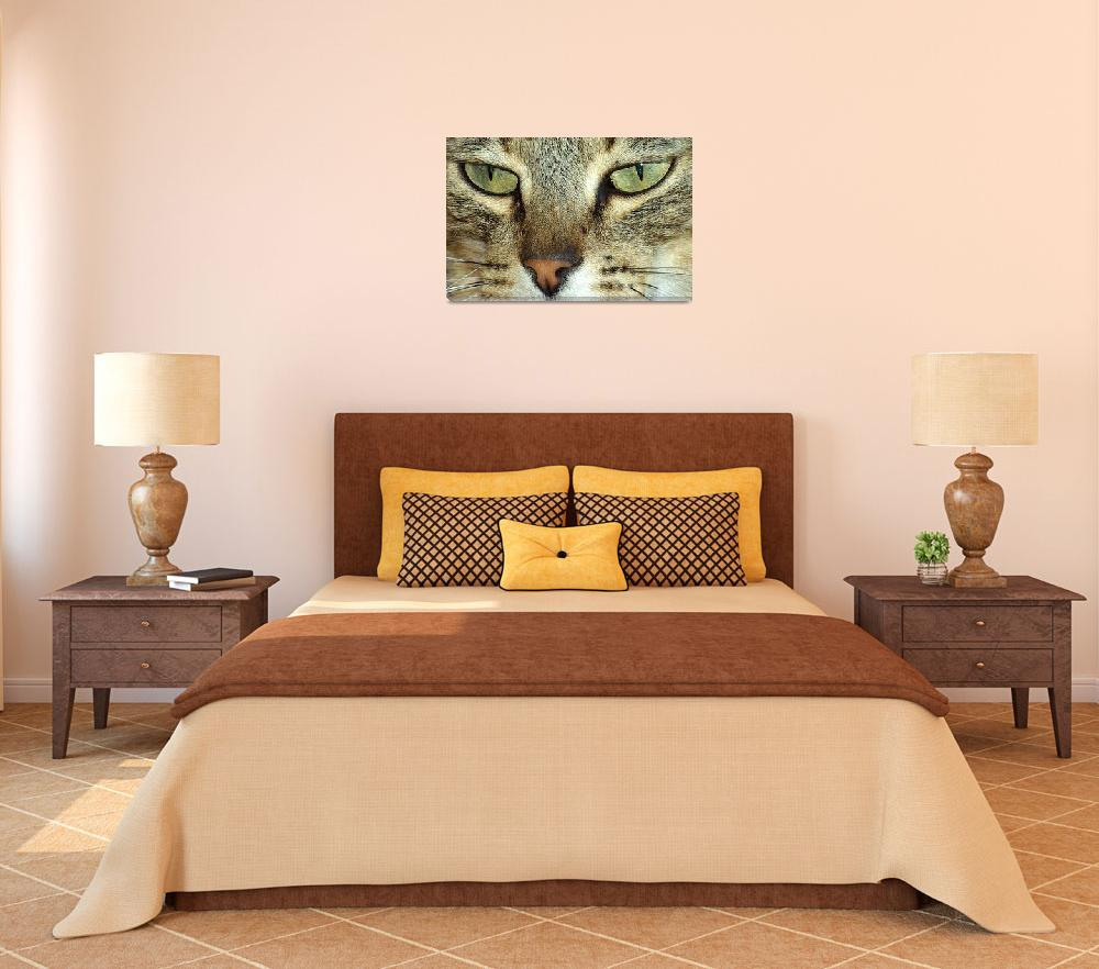 """""""cats eyes""""  (2009) by loversdream"""