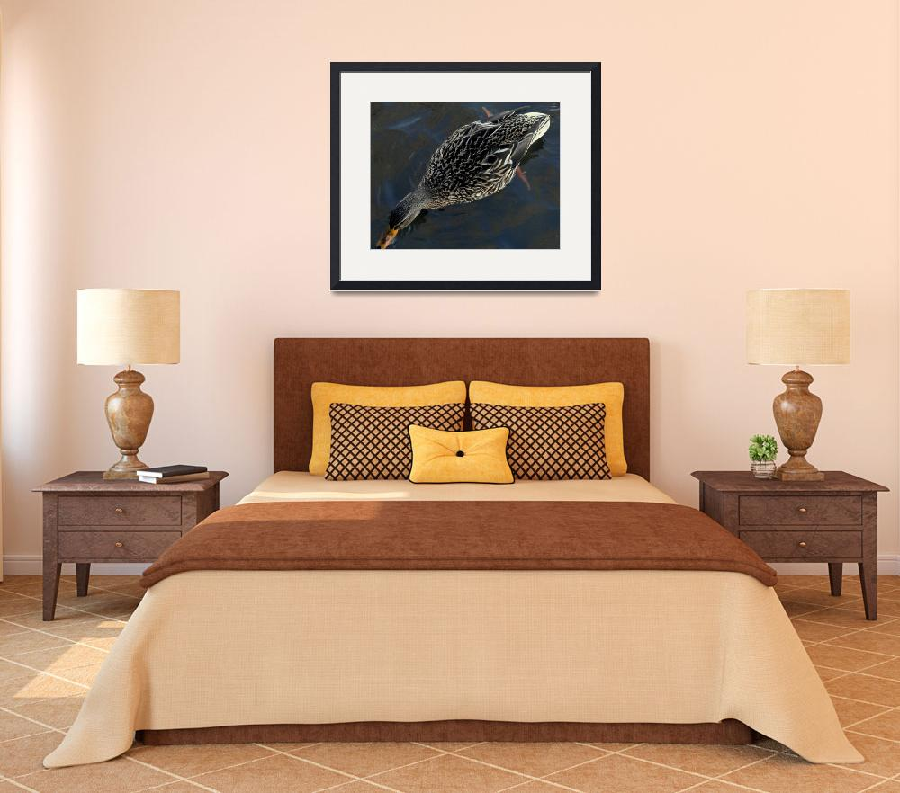 """""""Stretched out Female Mallard DSC01952&quot  (2012) by waterfowlalexandriava"""