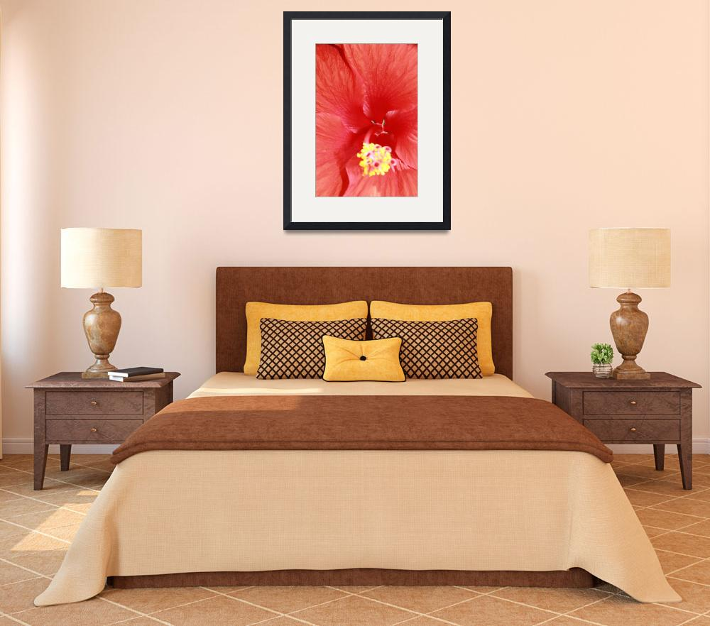 """""""Red Hybiscus (Hibiscus rosa-sinensis)&quot  (2010) by easyfigure"""