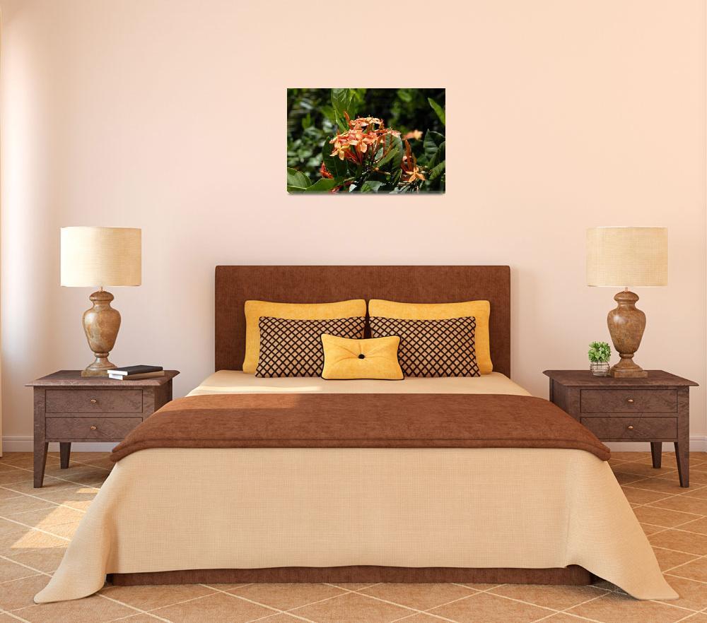 """Cayman Islands Plant Life : Orange Ixora&quot  by RonScott"
