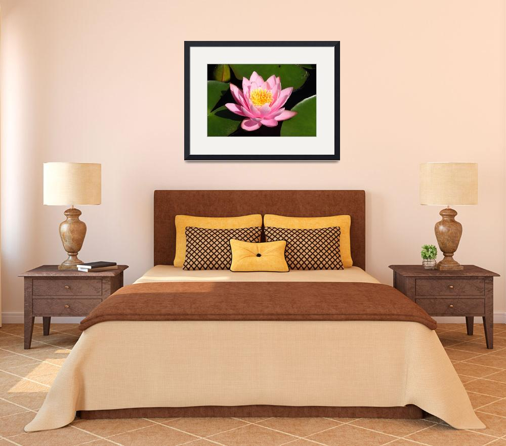 """""""Pink Water Lily 2&quot  (2009) by FordLou"""