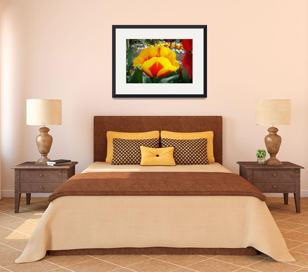 """""""Golden Tulip""""  (2012) by CorinneDany"""