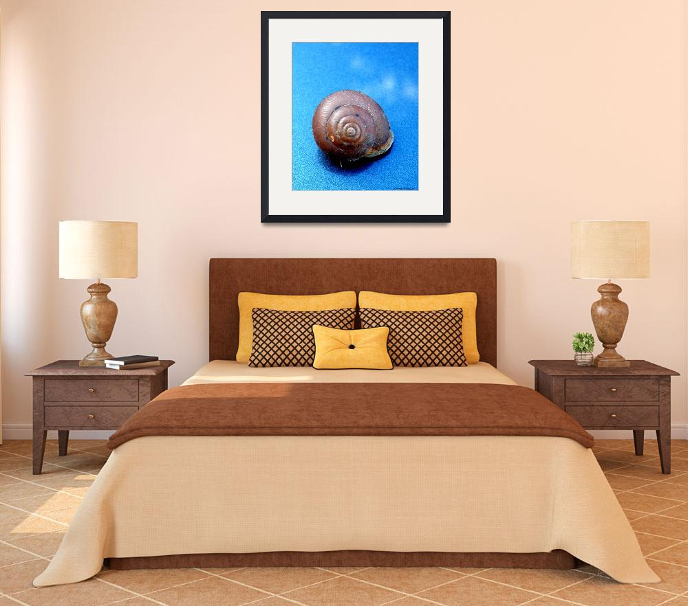 """""""The Shell of a Snail&quot  (2011) by Kimmary"""