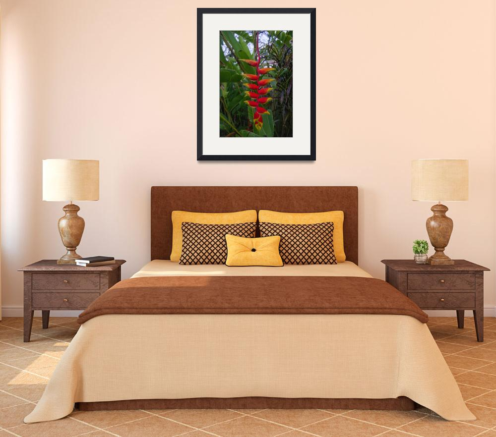 """""""Saint Lucia Garden&quot  (2013) by RQGallery"""