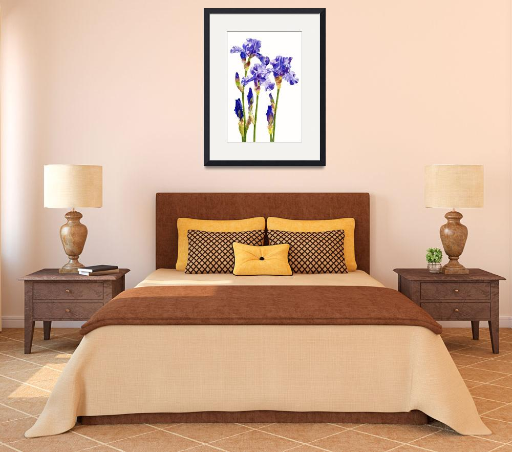 """Three Purple Irises (white background)&quot  (2013) by Pacific-NW-Watercolors"
