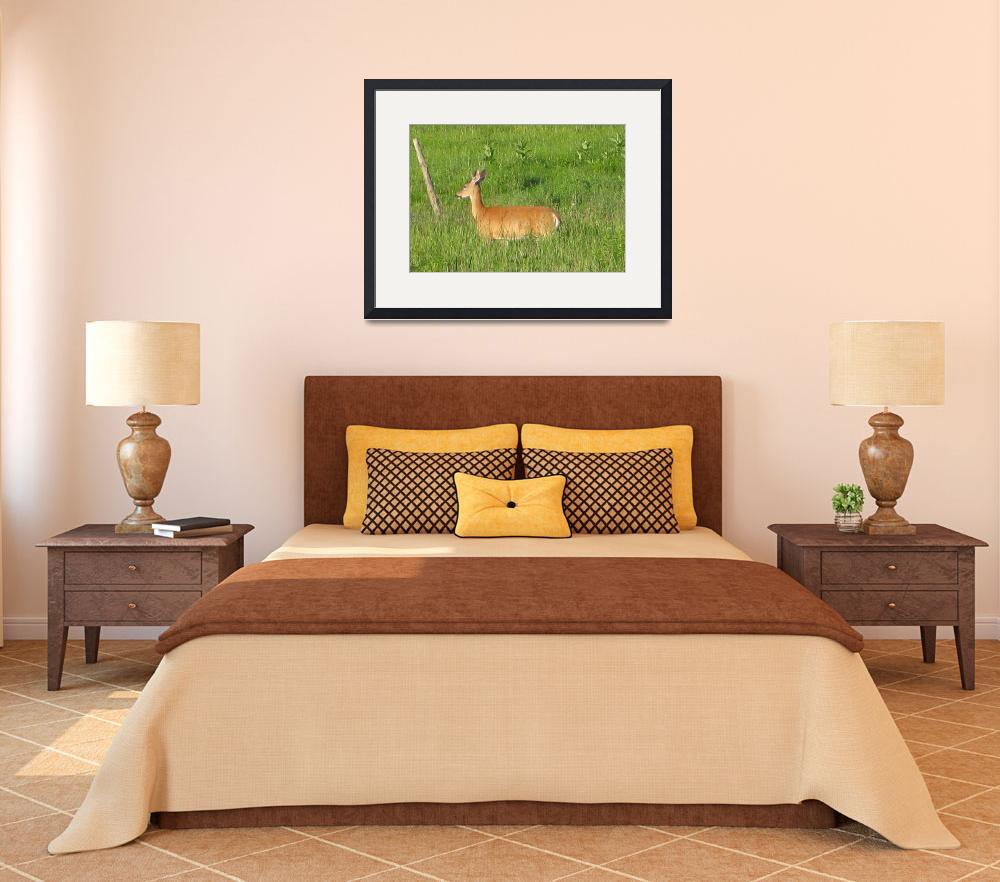 """""""Whitetail Deer""""  (2009) by Whittier"""