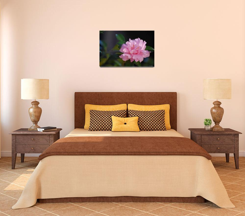 """""""Pink Camelia""""  (2011) by rderder"""
