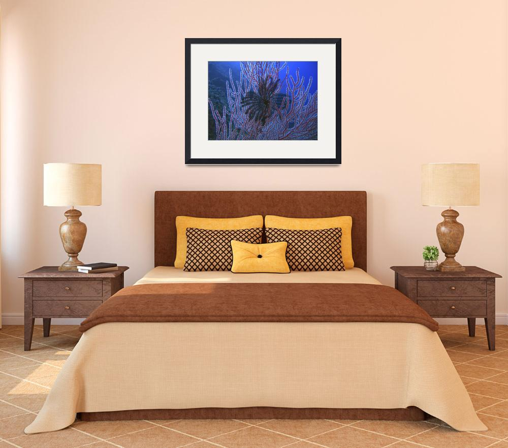 """""""Black Feather Star and Black Corals on the Wall&quot  by Mac"""