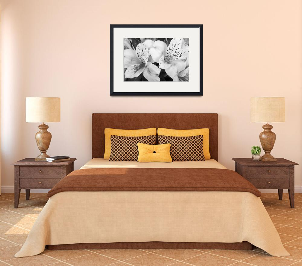 """""""Peruvian Lilies  Flowers Black and White Print&quot  (2011) by lightningman"""