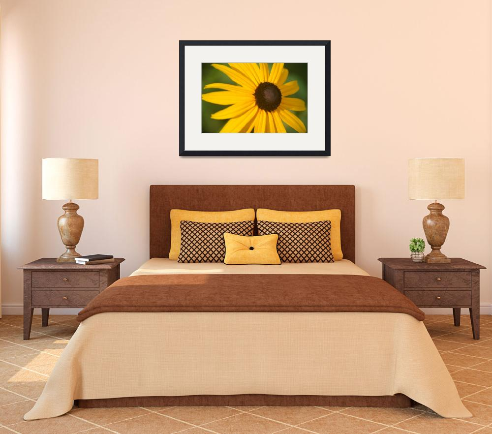 """""""Sunshine and Susans""""  (2007) by energyandpeace"""