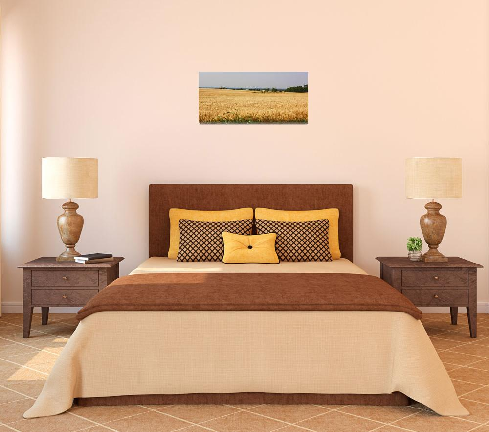 """""""Oklahoma Wheat Field&quot  (2011) by picturesbybgale"""