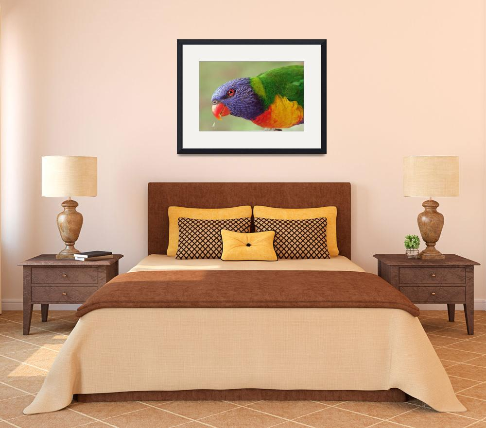 """Rainbow Lorikeet 2&quot  by keispencer"