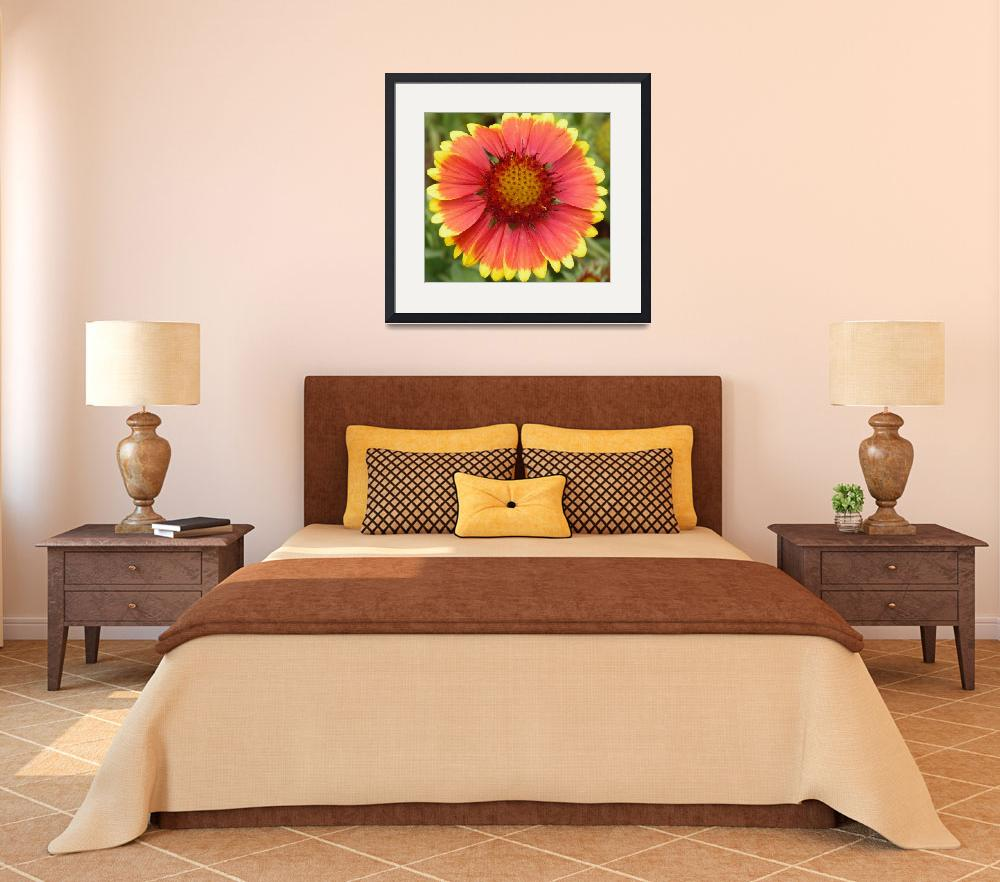 """""""yellow and orange flower 1&quot  (2010) by sb1photography"""