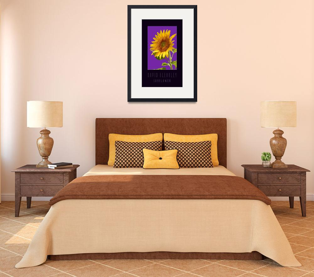 """Sunflower Poster Black Ground&quot  by DavidBleakley"