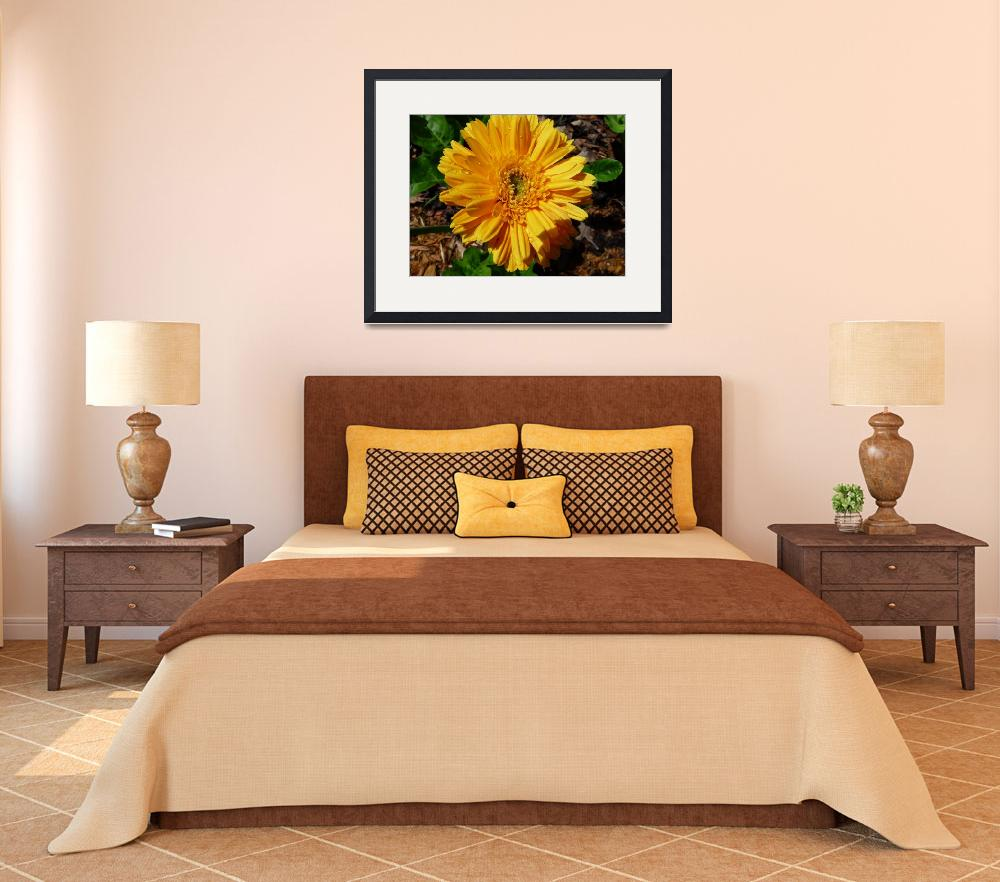 """""""Gerber Daisy&quot  (2010) by kkmyers"""